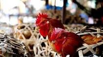 Virus H7N9 không lây lan từ người sang người?
