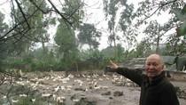 Cưỡng chế đất ở Hà Nam:5000m2 đất đền bù bằng đàn vịt đẻ trứng một đêm