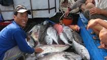 Cá đầy khoang trở về từ Hoàng Sa, nụ cười rạng ngời trên mặt ngư dân