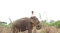Điều kỳ lạ sau những vụ tàn sát thảm khốc voi rừng