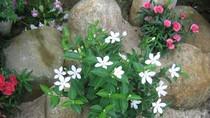 Chùm ảnh: Chiêm ngưỡng hoa xuân khoe sắc khắp nơi