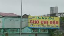 """Phì cười hình ảnh """"cực độc"""" của độc giả sưu tầm chỉ có ở Việt Nam (P9)"""