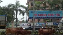 Những hình ảnh 'cười ra nước mắt' chỉ có ở giao thông ở Việt Nam (P13)
