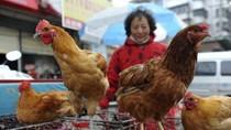 Cảnh báo cúm H7N9 từ Trung Quốc có thể lan vào Việt Nam