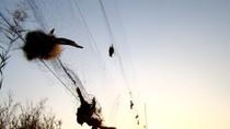 Trung Quốc: Giăng lưới bẫy chim ở khu du lịch