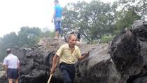 Ảnh: Trung Quốc phát hiện thân cây cổ thụ 800 tuổi, dưới đất 500 năm