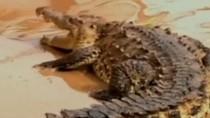 Video: Cá sấu bò trên đường phố Mexico sau cơn lũ