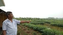 """Người dân Vĩnh Phúc lo lắng về siêu dự án của FLC """"nuốt"""" trọn đất nông nghiệp"""