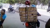 Muôn kiểu quá tải, quá khổ và 'quá liều' của giao thông Việt Nam (P15)