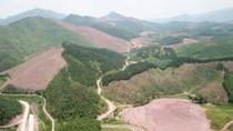 Cận cảnh rừng phòng hộ ở Quảng Ninh bị phá tan, đốt trọc