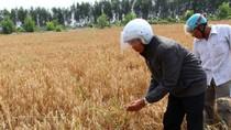 """Hơn chục cán bộ ở Kiên Giang bị kỷ luật vì """"ăn chặn"""" tiền của dân"""