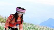 Lên cáp treo Fansipan ngắm hoa tam giác mạch mùa lễ hội