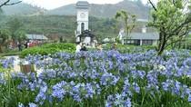 Thung lũng hoa mát lịm Fansipan hấp dẫn trong mùa nóng
