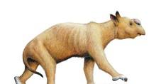 Phát hiện hóa thạch gấu túi lớn nhất trên thế giới