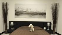 Khách sạn cực kỳ sang trọng, giá hơn 2 triệu đồng/đêm cho... chó mèo