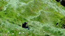 Bài dự thi số 115: Bồ công khoe sắc giữa thiên nhiên Ireland tươi đẹp