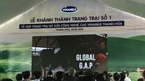 Những hình ảnh ấn tượng ở trang trại bò sữa công nghệ cao Vinamilk Thanh Hóa