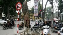 """Những gốc cây khô """"tử thần"""" trên đường phố Hà Nội"""