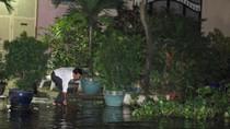 Ảnh: 'Vật lộn' trong rốn ngập, người Sài Gòn vớt bèo trước cửa nhà
