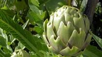 14 thực phẩm giải độc cho gan