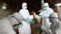 Thêm một ca tử vong do mắc cúm A/H5N1