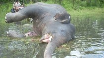 Phẫn nộ: Động vật bị tàn sát qua ống kính của nhà báo Đỗ Doãn Hoàng P3