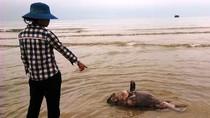 Cá chết nghi do nước biển bị nhiễm độc, người tắm có sao không?