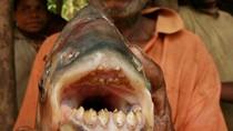 """Hàm răng đáng sợ của loài cá đã """"thiến"""" ngư dân"""
