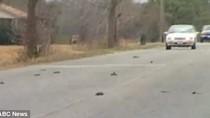 Hàng loạt chim chết tại Mỹ trong đêm giao thừa