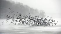 Ảnh: Nước Mỹ dưới đợt không khí lạnh kỷ lục