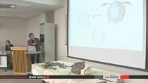Phát hiện rùa hóa thạch 70 triệu năm tuổi tại Nhật Bản