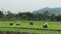 Giữ chữ tín cho nông sản Việt Nam
