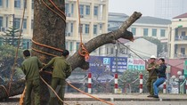 Dự án tiền tỷ ở Hà Nội và những nhát chém kinh hoàng hạ sát cây xanh
