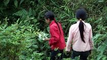 Theo chân học sinh Nậm Mười lên núi hái rau rừng