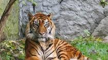 Chùm ảnh: Các loại động vật từng được tiến vua ở Việt Nam (P2)