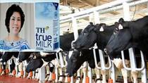 """Chỉ hơn 22.000 con bò, sao TH True Milk dám bảo """"không có đối thủ""""?"""