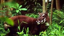 Quản lý thực vật rừng, động vật rừng nguy cấp, quý, hiếm
