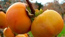 Vì sao không nên ăn nhiều mận, hồng, táo, chuối...?