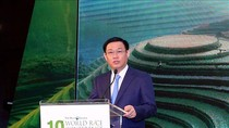 Gạo Việt Nam ngày càng khẳng định uy tín trên thị trường quốc tế
