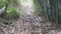 Vụ phá rừng đặc dụng đền Hùng: Hé lộ những thông đầu tiên về thủ phạm