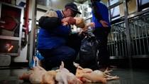 Trung Quốc cam kết công khai tin tức dịch cúm gia cầm, giảm tử vong