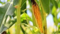 Trung Quốc lập kế hoạch trở thành siêu cường sản xuất sản phẩm biến đổi gen