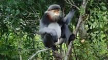 Từ vụ giết voọc dã man: Chiêm ngưỡng 10 loài voọc cực quý của Việt Nam