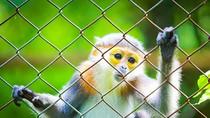 Chiêm ngưỡng những chú Voọc được hồi sinh ở vườn quốc gia Cúc Phương