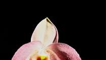 Chùm ảnh: Lạ kì loài hoa mang tên Hồ Chí Minh ít người biết