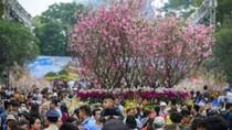 Hà Nội công bố đường dây nóng xử lý thông tin mùa lễ hội