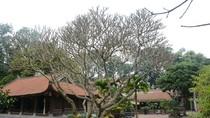 Tư liệu quý chỉ có ở chùa Vĩnh Nghiêm