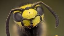 Thế giới côn trùng qua ảnh macro của Nicolas Reusens