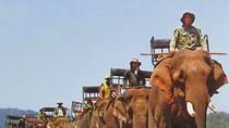 """Ông Dương Trung Quốc: """"Sẽ đưa vấn đề bảo vệ voi ra Quốc hội"""""""