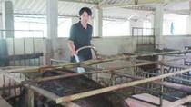 Tốt nghiệp đại học về quê… nuôi lợn kiếm 200 triệu/năm